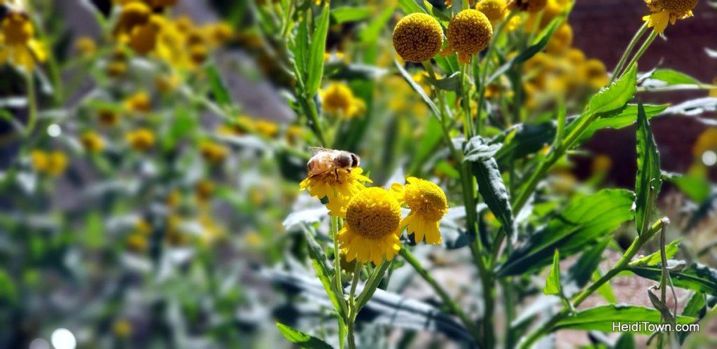The FREE Cheyenne Botanic Gardens in Cheyenne, Wyoming. HeidiTown (14)