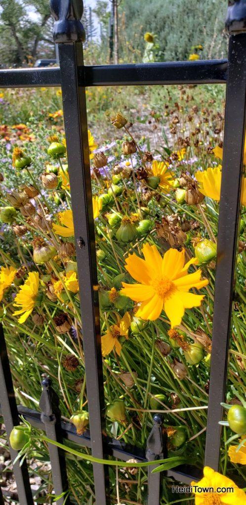The FREE Cheyenne Botanic Gardens in Cheyenne, Wyoming. HeidiTown (23)