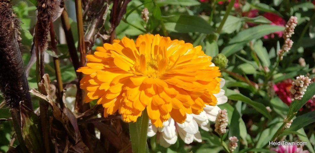 The FREE Cheyenne Botanic Gardens in Cheyenne, Wyoming. HeidiTown (5)