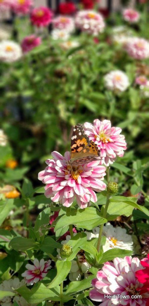 The FREE Cheyenne Botanic Gardens in Cheyenne, Wyoming. HeidiTown (6)