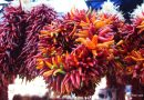 Fall in Love with Pueblo, Colorado, Part One Chile Festival. HeidiTown (5)