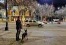 Take Your Furry Friend to Dog-Friendly Fort Collins, Colorado. HeidiTown (8)