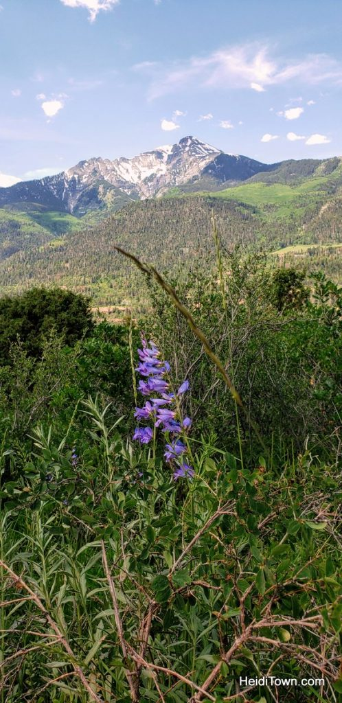 Trail Ride to the Top of the World with Action Adventures in Ouray. HeidiTown (14)