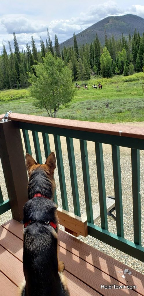 Why to Bring the Dog to Snow Mountain Ranch, Colorado. HeidiTown (9)