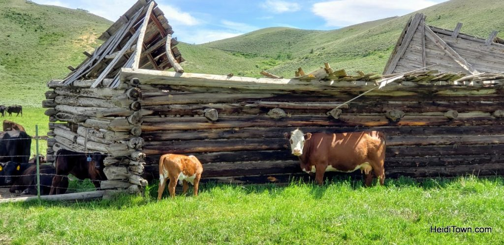 Day Trip from Snow Mountain Ranch in Grand County, Colorado. HeidiTown (10)
