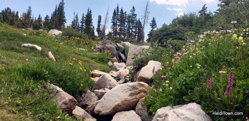 The Snowy Range in Living Color Wildflowers in Wyoming. HeidiTown (8)
